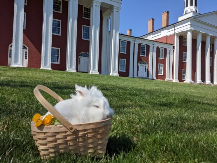 Daisy the bunny poses for a picture on the colonnade. Photo by her owner Jessie Ogden, '23.